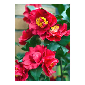 Red Camellia Personalized Announcement
