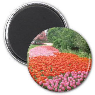 Red Canadian Tulip Festival, Experimental Farm, Ot 6 Cm Round Magnet