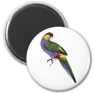 Red Capped Parakeet Parrot Bird 6 Cm Round Magnet