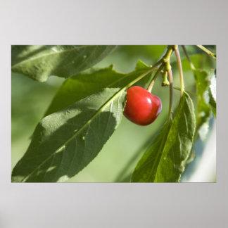red cherry print