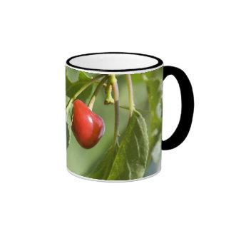 red cherry ringer mug