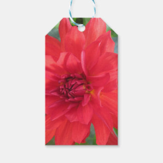 Red Dahlia Plant Gift Tags