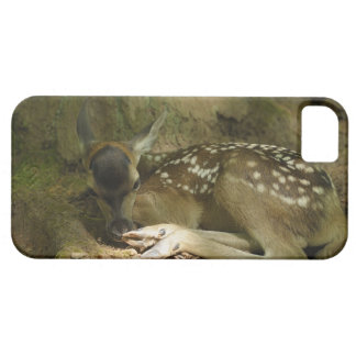 Red Deer Fawn in Forest, Germany iPhone 5 Covers