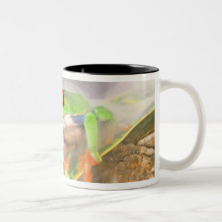 Red Eye Treefrog in the mist, Agalychinis Two-Tone Coffee Mug