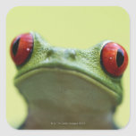 Red-eyed tree frog (Agalychnis callidryas) Square Sticker