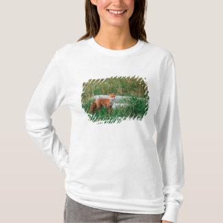 Red Fox, Vulpes vulpes, Alaska Peninsula, T-Shirt