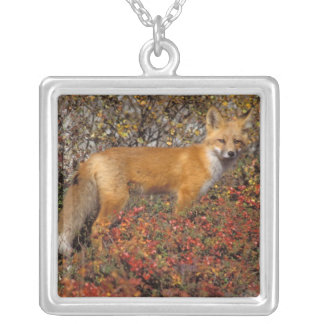 red fox, Vulpes vulpes, in fall colors along the 5 Silver Plated Necklace