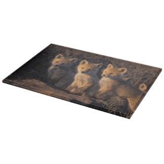 red fox, Vulpes vulpes, kits outside their Cutting Board
