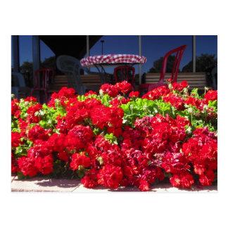 Red Geraniums Cafe Postcard