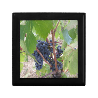 Red grapes on the vine with green leaves gift box