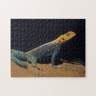 Red-Headed Rock Agama Lizard, El Kerama Ranch Jigsaw Puzzle