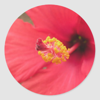 Red Hibiscus Flower Stickers