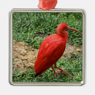 Red Ibis Christmas Ornament