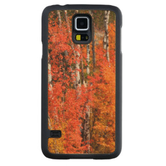 Red Maple (Acer Rubra) And Aspens Carved Maple Galaxy S5 Case