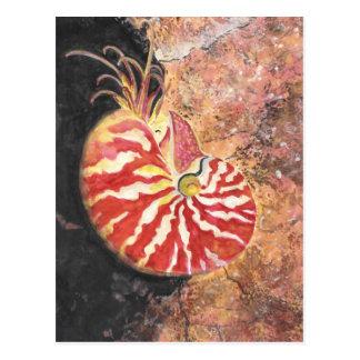 Red Nautilus Postcard