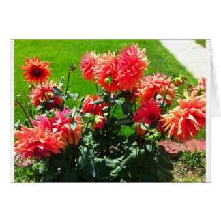 Red Orange Flower Card