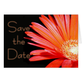 Red Orange Gerbera Daisy Save the date Greeting Card