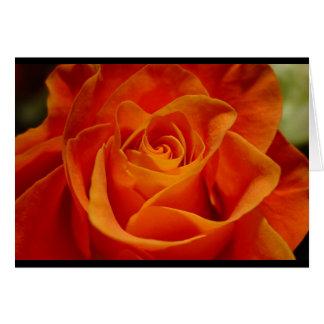 Red Orange Rose Greeting Card