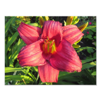 Red Oriental Day Lily Flower In The Golden Hour Art Photo