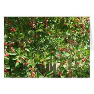 Red Pie Cherries Card