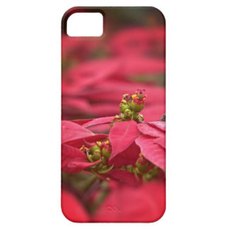 Red Poinsettia Flower iPhone Case