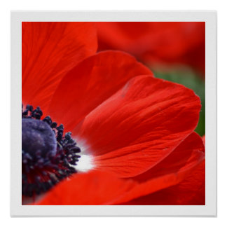 Red Poppy Spring Floral Poster