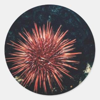 Red Sea Urchin Round Sticker