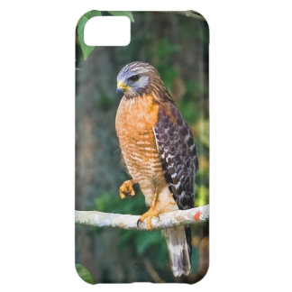 Red-Shouldered Hawk on a Limb iPhone 5 Case