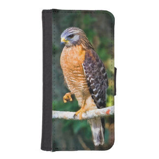 Red-Shouldered Hawk on a Limb iPhone SE/5/5s Wallet Case