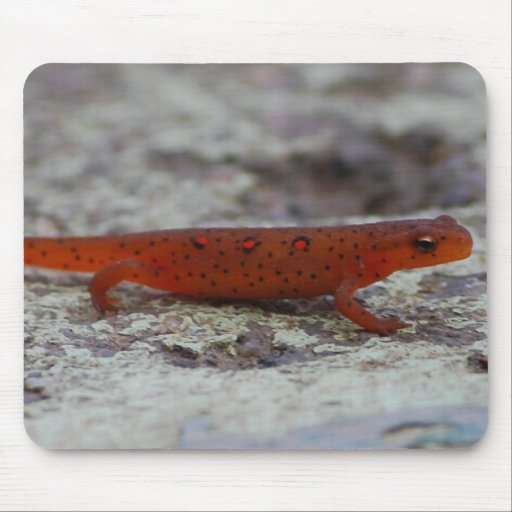 Red Spotted Newt mousepad