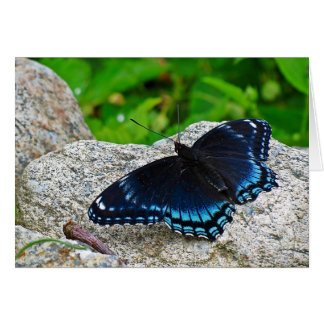 Red Spotted Purple Butterfly Note Card