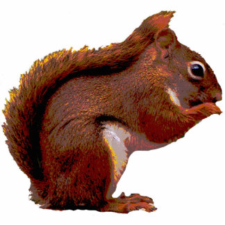 Red Squirrel Christmas Hanging Acrylic Photo Sculpture Decoration