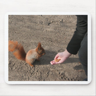Red Squirrel Feeding Mouse Pad