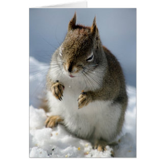 Red Squirrel Squee Card