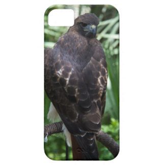 Red Tail Hawk Case For The iPhone 5