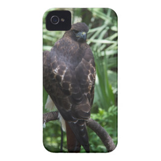 Red Tail Hawk Case-Mate iPhone 4 Cases