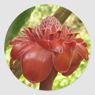Red Torch Ginger Tropical Flower Photography Classic Round Sticker