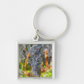 Red Wine Grapes on Vine Key Ring