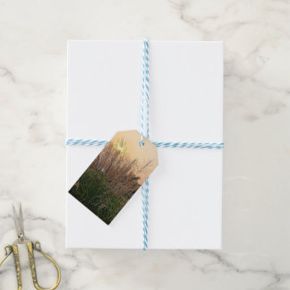 Reed At Sunset Gift Tags