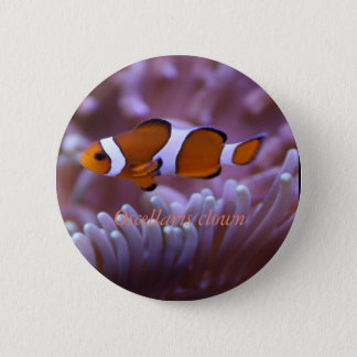 Reef colletions button #1