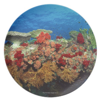 Reef scenic of hard corals , soft corals plate