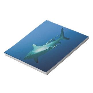 Reef Shark Great Barrier Reef Coral Sea Notepad