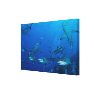 Reef Shark Wrapped Canvas