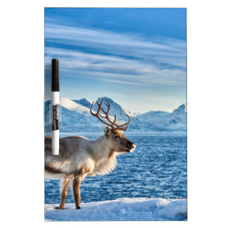 Reindeer in snow covered landscape at sea dry erase board
