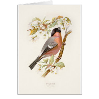 Relative Wild Birds Swaysland Great Bullfinch Card