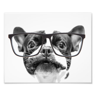 Reputable French Bulldog with Glasses Photo Print