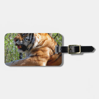 Resting Tiger Luggage Tag