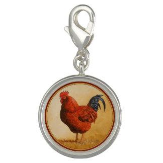 Rhode Island Red Rooster Chicken