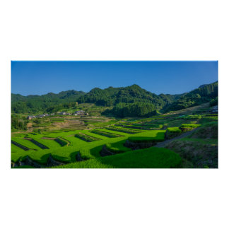 Rice Paddy Field in Japan Poster