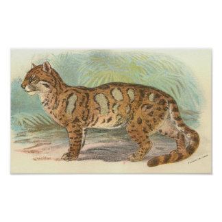 Richard Lydekker - Clouded Leopard Portfolio Poster